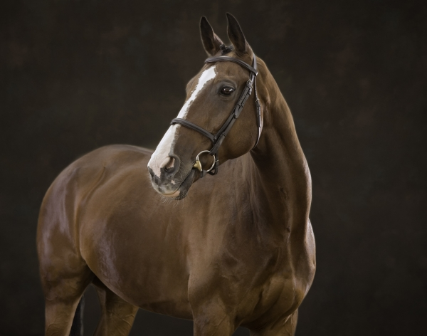 Bonito Horse photographer Ireland Professional Ni Riain Fine Art Equine Photography