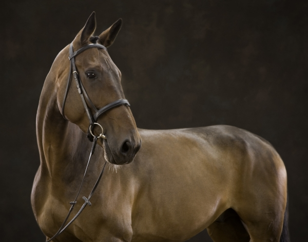 Gina Johnston Horse photographer Ireland Professional Ni Riain Fine Art Equine Photography