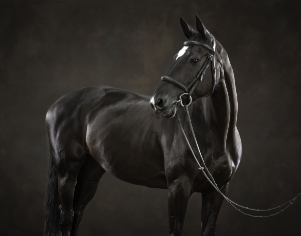 Horse photographer Ireland Professional Ni Riain Fine Art Equine Photography