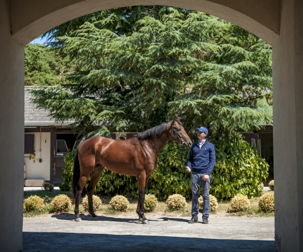 Joseph OBrien Horse Trainer Owning Kilkenny IrelandNi Riain Equine photographer