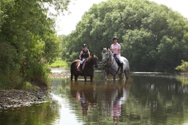 Horse photographer Ireland Professional Ni Riain Fine Art Equine Photography