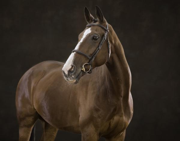 Bonito Horse photographer Ireland Professional Ni Riain Fine Art Equine Photography