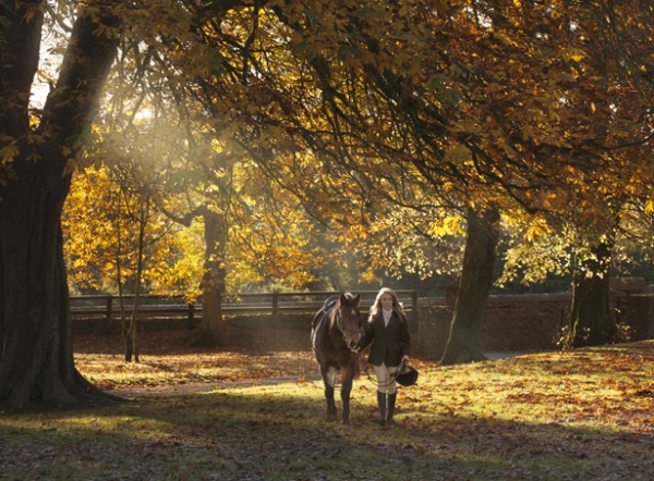 Autumn colour Irelands leading Equine photographer by Ni Riain Photography